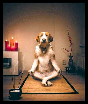 funny-Meditating-Dog4